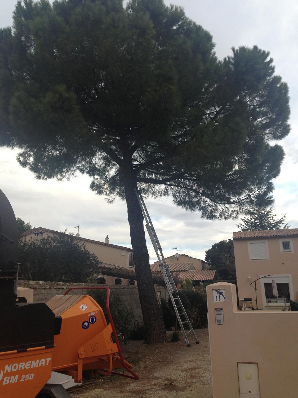 abattage arbre montpellier